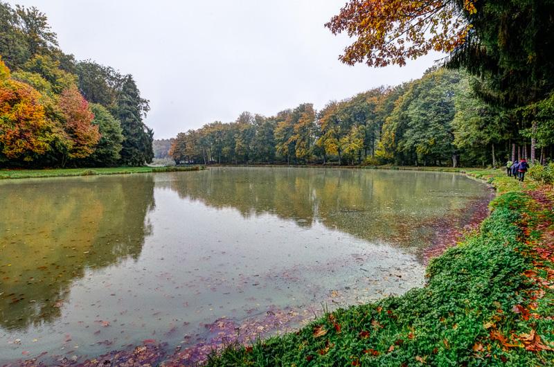 Charme d'un étang du Sundgau