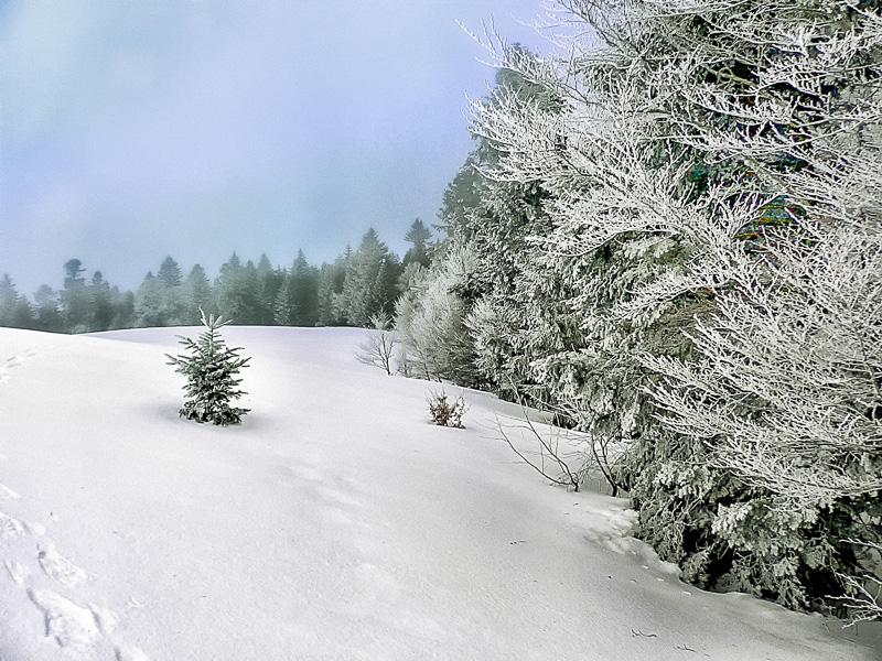 Traces de raquettes dans la neige