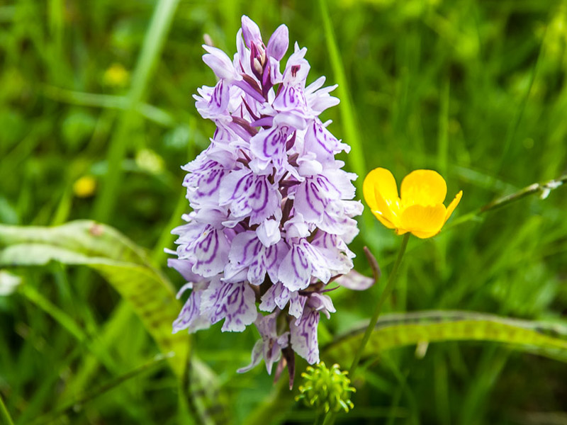 Les orchidées, une fleur que connaissent tous les guides