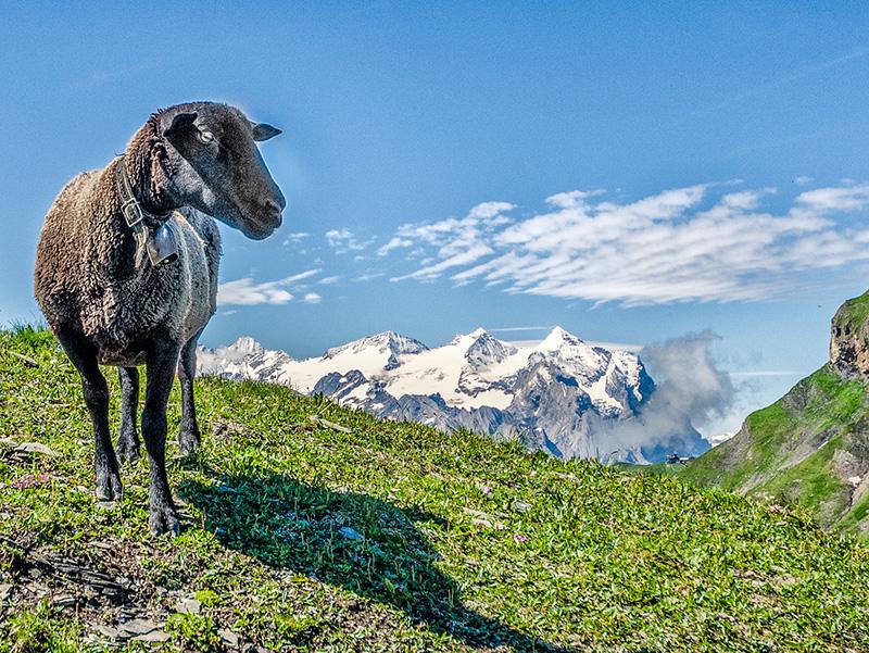 Alpes Suisses, région Melchsee-Frutt