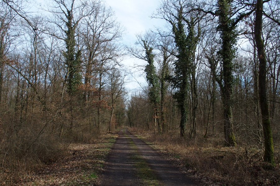 Rando dans la forêt de la Harth