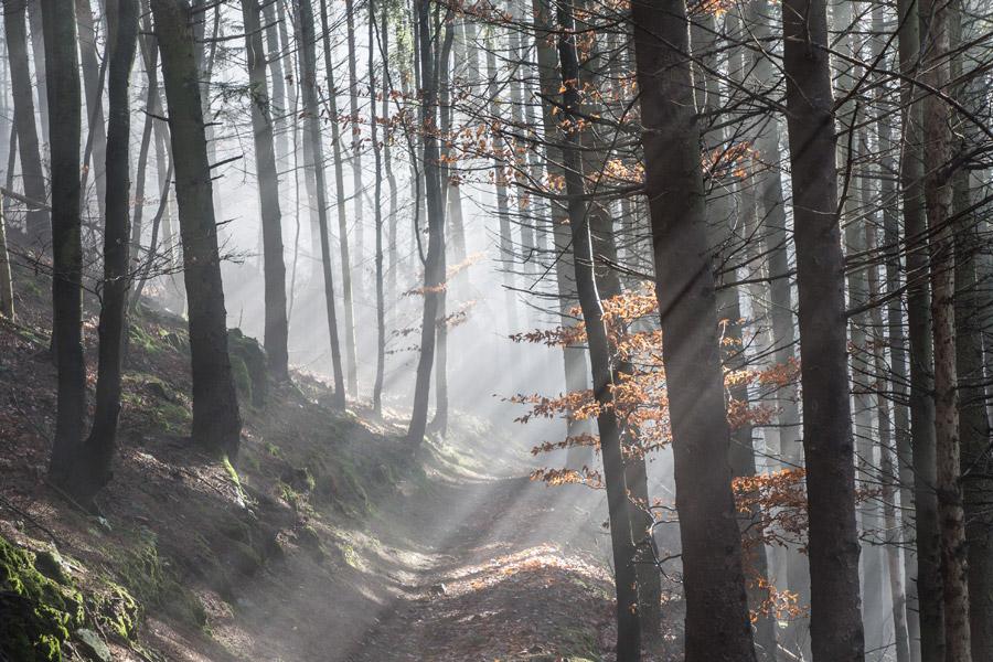 Thann, sentier de la Waldkapelle