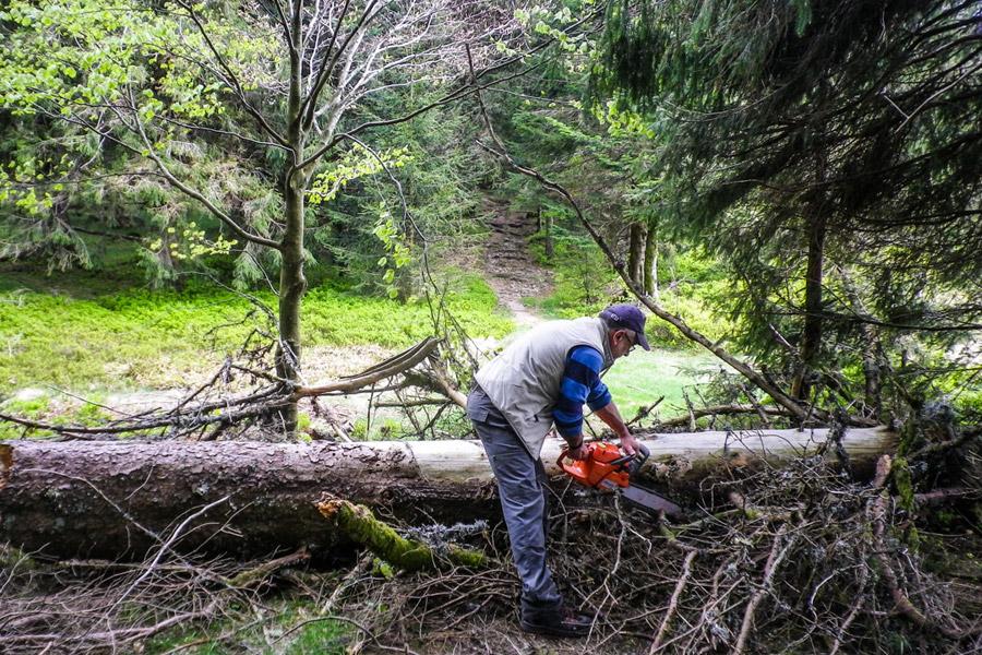 L'arbre renversé par la tempête bloque le GR531