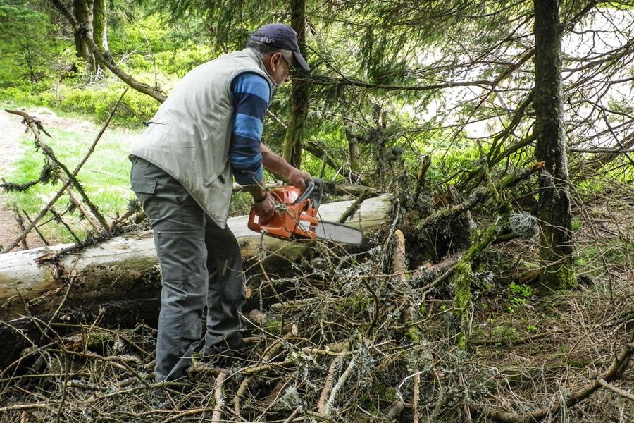 Un bénévole du Club Vosgien de Mulhouse découpe les branches