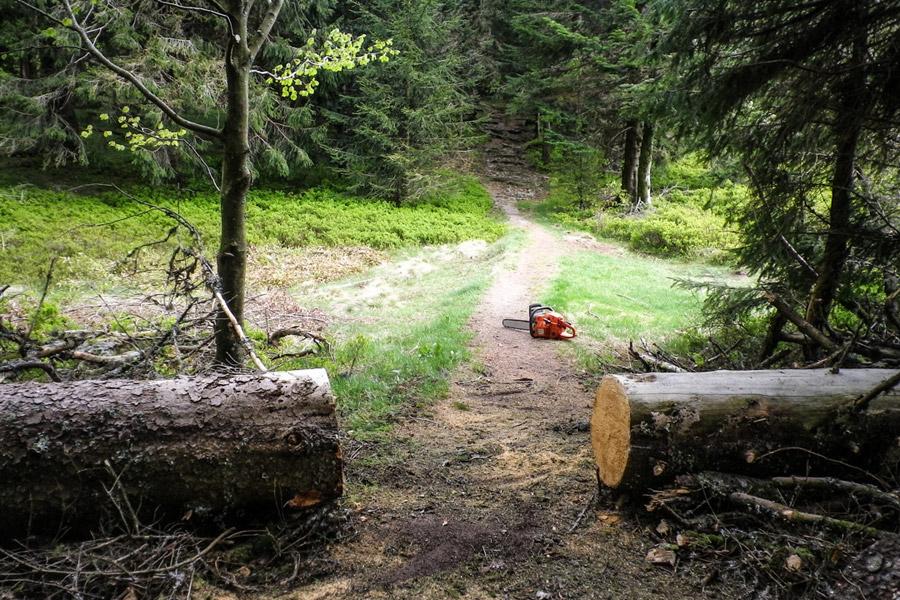 arbre tronçonné pour dégager le GR531