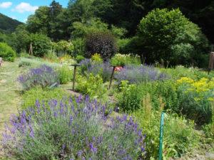 Jardin médiéval à Murbach
