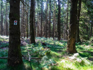 Sentier forestier vers l'abri Neuberg