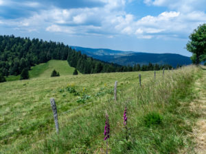 Non loin du Col du Bramont