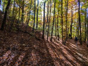 forêt près de Rimbach