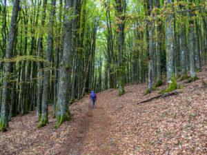sentier de forêt après Glashütte