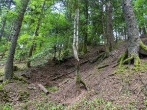 forêt et érosion