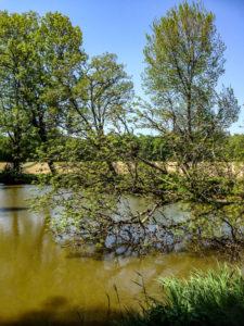 Chavannes-sur-l'Étang, bien nommé