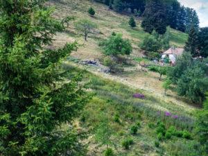 Le chemin du retour passe par la ferme auberge Bruckenwald