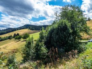 chemin en Forêt Noire