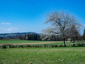 paysage printanier à Pleigne