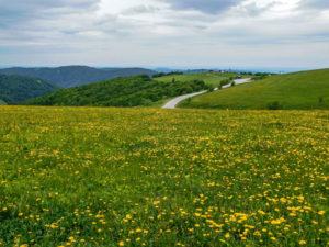 Route des Crêtes, secteur du Hohneck