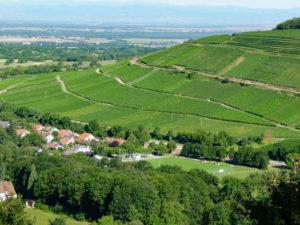 vignoble, Badenweiler, Forêt noire