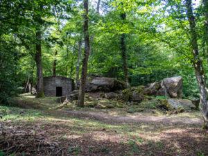 Dans la forêt de Burnhaupt-le-Bas, des bunkers en ruine