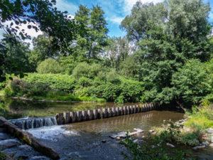 La Doller, un cours d'eau qui traverse la forêt de Burnhaupt