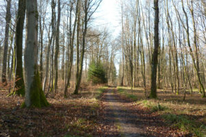 Forêt entre Wittersdorf et Emlingen
