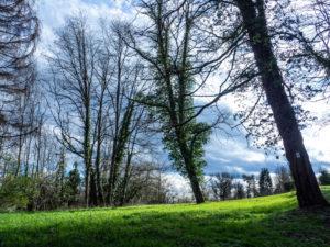 La forêt entre Mulhouse et Didenheim