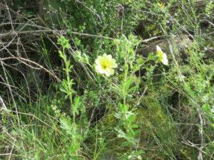 Fleurs des prés au Mehrbachel