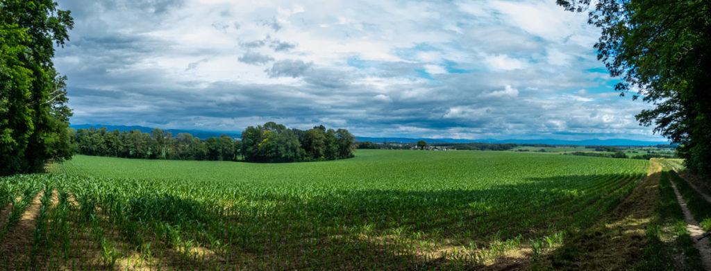 Après Rantzwiller, belles vues panoramiques