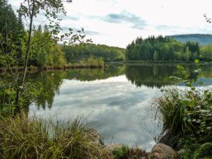 Après Melisey, on longe un étang après l'autre