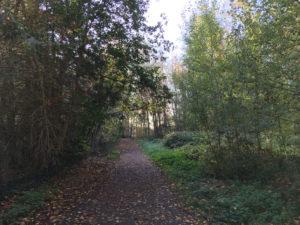 L'automne dans la forêt du Nonnenbruch